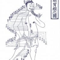 胃経経絡図