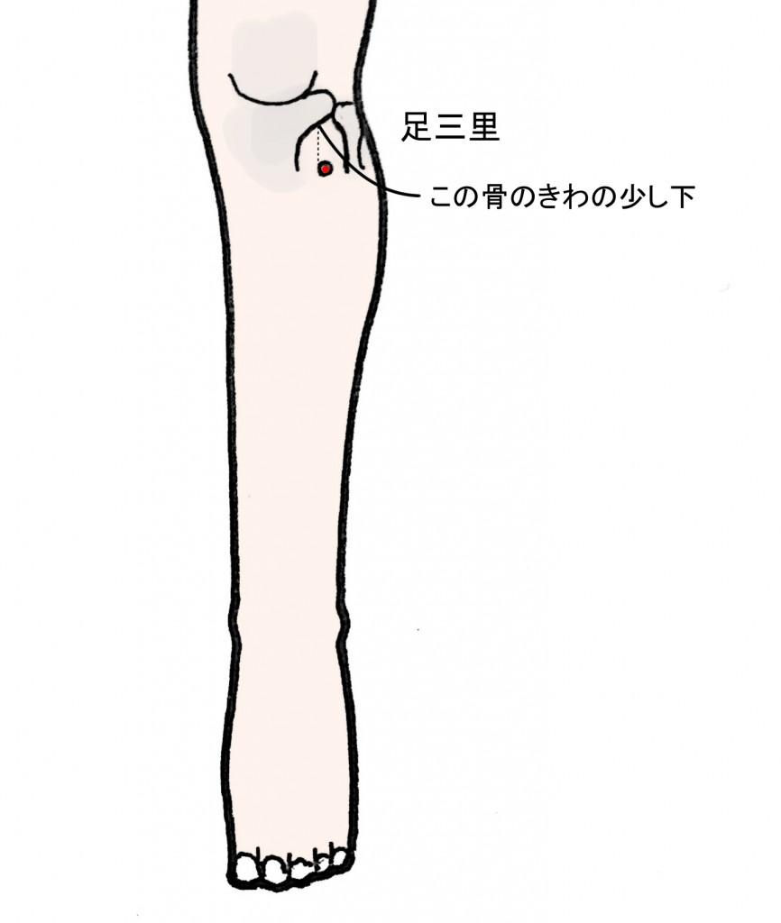 足三里 胃腸や足腰を元気にするツボ